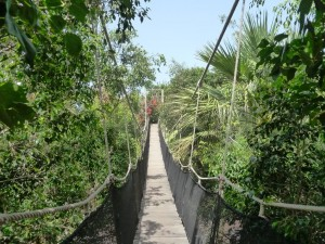 jungle-park-tenerife